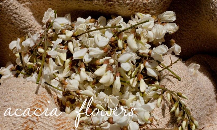 robinia-flowers