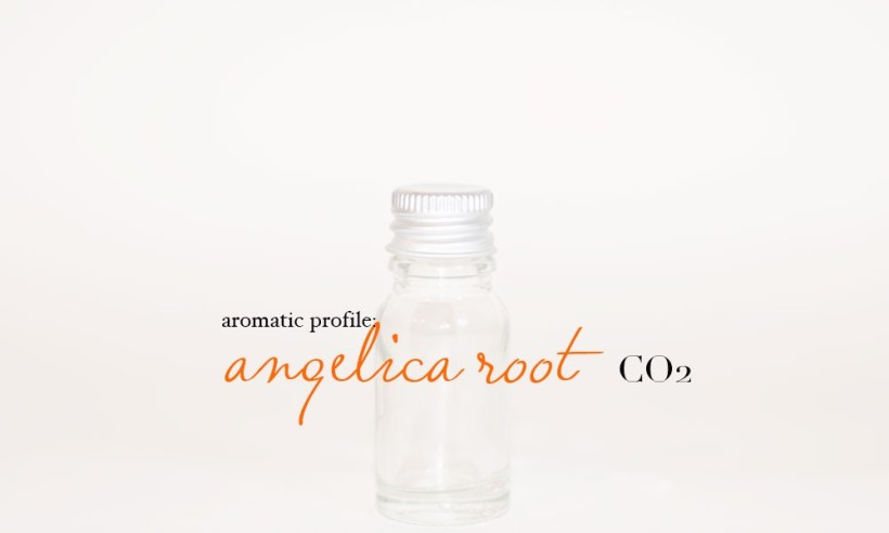 angelica-root-co2-1000x600