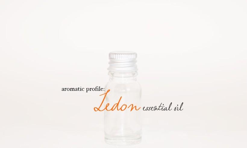ledon-1000x600