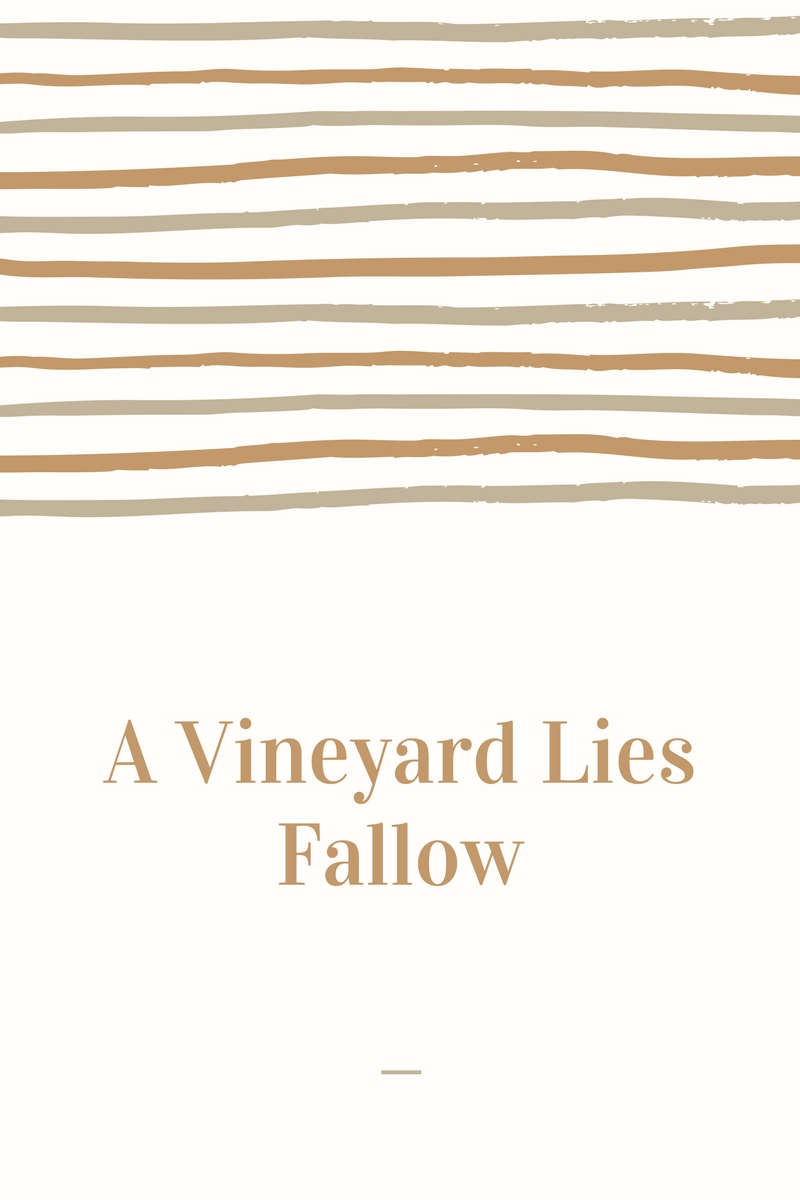 A vineyard lies fallow